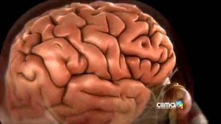La meningitis y su relación con el estado del tiempo