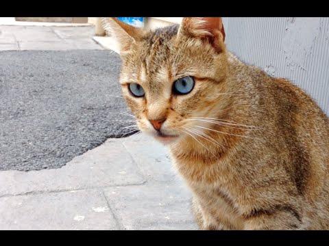 Желто-синий кот