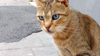 Yellow cat with deep blue eyes
