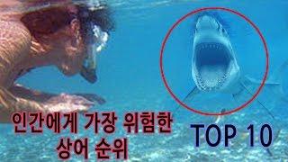 인간에게 가장 위험한 상어 순위 TOP 10 // best dangerous shark ranking TOP 10