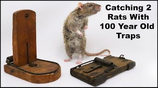 Catching 2 Rats With 100 Year Old Traps & New Pet Rats. Mousetrap Monday