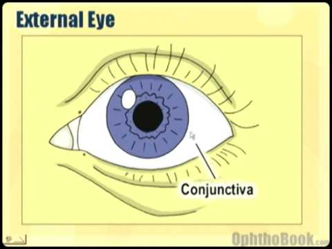 Ophthalmology Lecture - Eye Anatomy Part 1