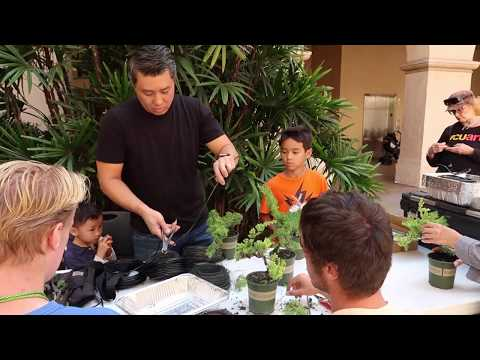 A Day in San Diego: Free Kids Bonsai Workshop