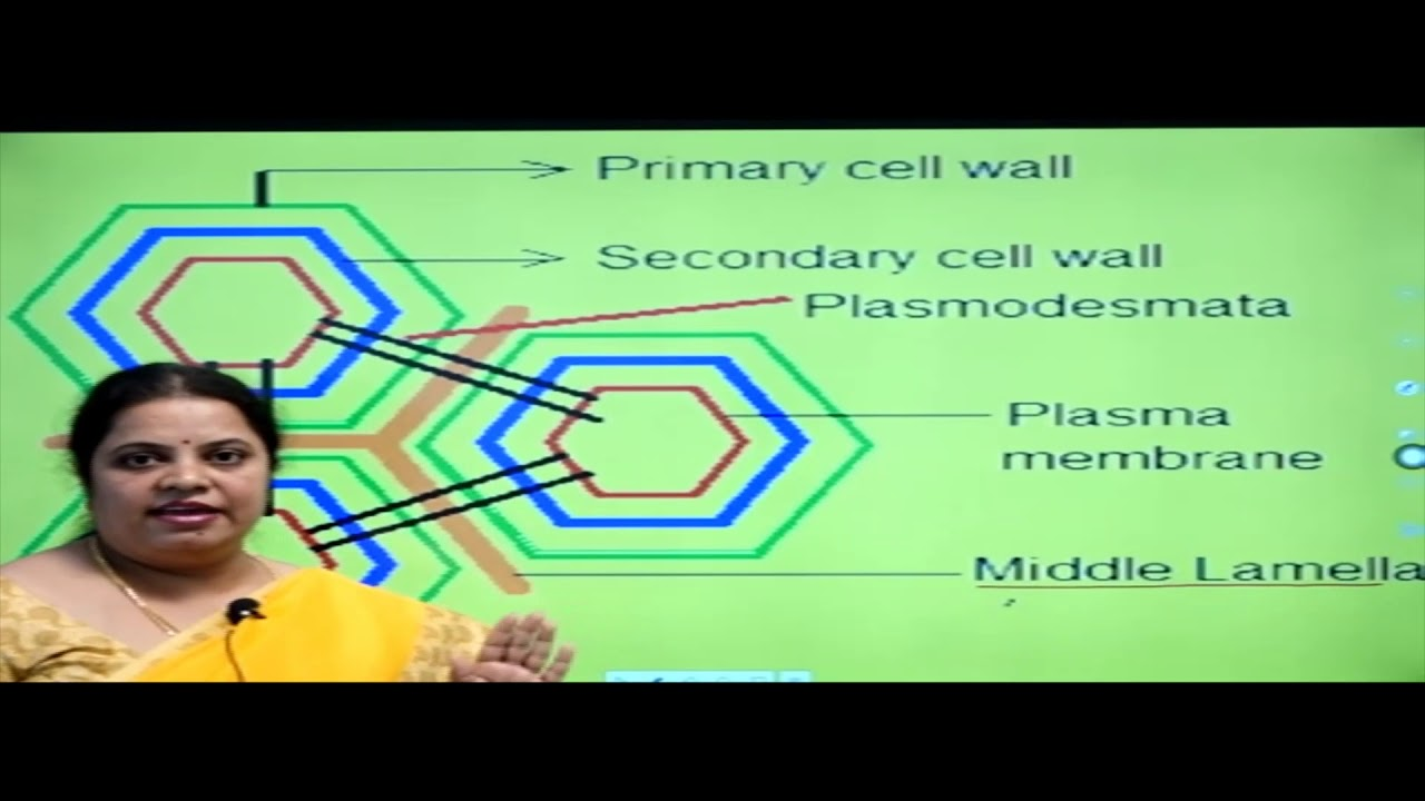 I PUC | Biology | Cell the unit of Life- 04