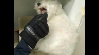Dog Attack Or Fear Biting? - Dog Whisperer Big Chuck Mcbride Safecalm.com