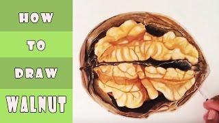 How To Draw A Walnut  كيف ترسم ثمرة الجوز