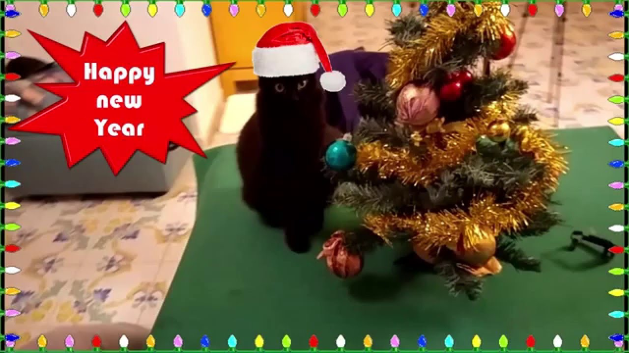 Jingle Cat, Funny Cat Playing Jingle Bells Wishes Merry Christmas Everybody    YouTube