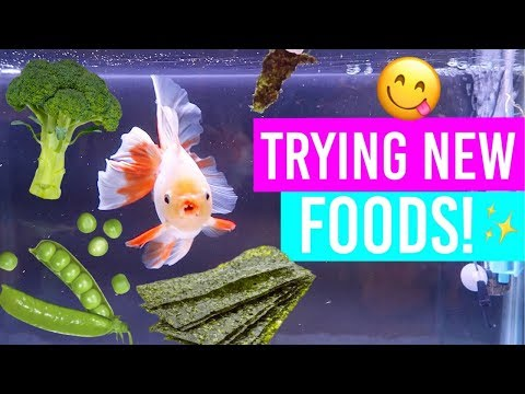 Feeding My Goldfish New Foods!