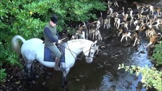 Grallagh Harriers hounds