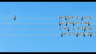 عدم ضياع الوقت في إرضاء الاخرين - الأستاذ يوسف الحماوي - الحلقة 27