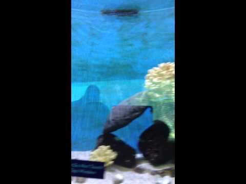 Sea Life Park Honolulu