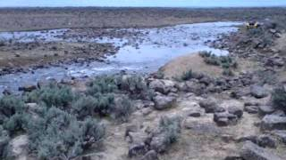 European Wild Boar Hunt, Idaho 5 20 2014