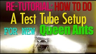 Ant Farm: How to Do A Test Tube Setup for New Queen Ants | AntsCanada Tutorial #35