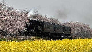 蒸気機関車2017 春(春色の汽車編)