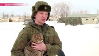 Военкот Мурзик на страже армейских порядков(Командир батальона на Урале взял в часть кота - для психологической разгрузки и чтобы солдаты-срочники..., 2016-03-18T11:30:47.000Z)