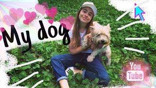 My dog( рассказ о моей собаке )/LOTTA SCHWARZ