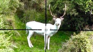 Gambar cover #waikarimoana Hunting two Fallow deer in New Zealand # 219  and deer tracking.