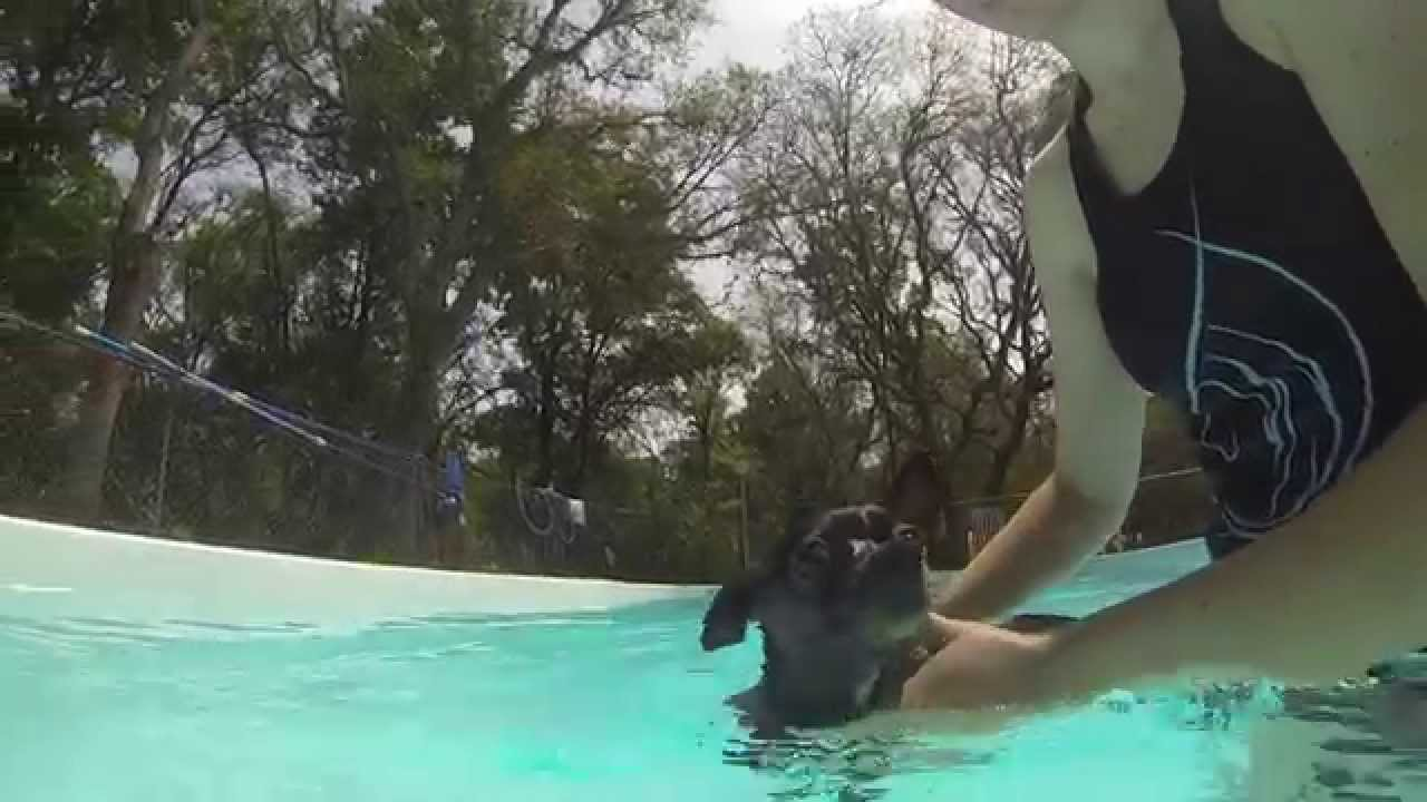 Introducing A Dog To The Pool Take The Lead K9 Training April 2014 Youtube