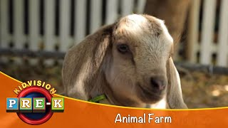 Take a Field Trip to the Animal Farm | KidVision Pre-K