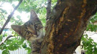 Как быстро растут котята. How fast kittens grow