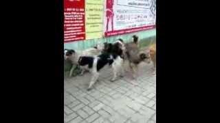Собаки в Сумах