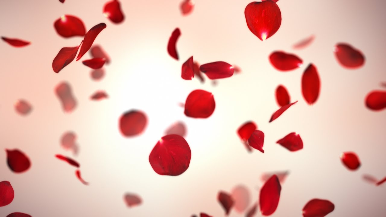 Falling Red Rose Petals Background