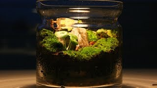 How to make moss terrarium - Yosun Teraryum yapımı