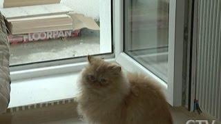 Человек и кошка мокнут у окошка: как в минской новостройке дождь пошёл