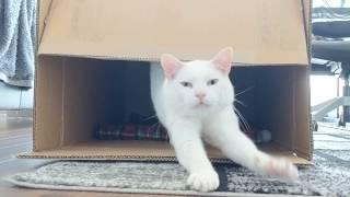 ネムネムもぁ~ん~、じゃなかったんかい!猫に「おやついる?」と声をかけたところ鬼クイックだった。