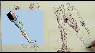 ANATOMY FOR ARTISTS: Keeping an Anatomy Sketchbook Demonstration