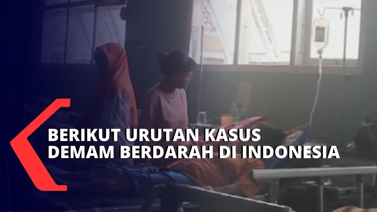 Berikut Kasus Demam Berdarah di Indonesia - KOMPAS