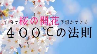 【お天気雑学】自分で桜の開花予想ができる「400℃の法則」
