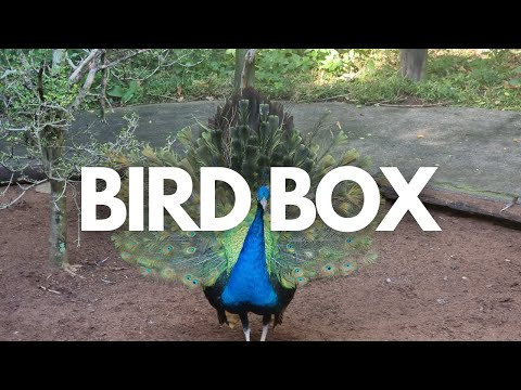 The largest bird park in Africa. World of Birds Wildlife Sanctuary (TOTALLY AWESOME!)