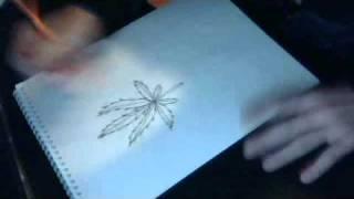 drawing a pot leaf