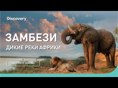 Замбези | Дикие реки Африки | Discovery Channel - Видео онлайн