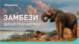 Замбези | Дикие реки Африки | Discovery Channel