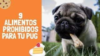 9 Alimentos Prohibidos para tu Pug