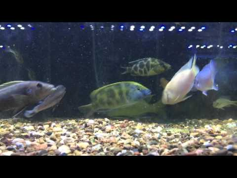 Actual Footage Of Gay Fish