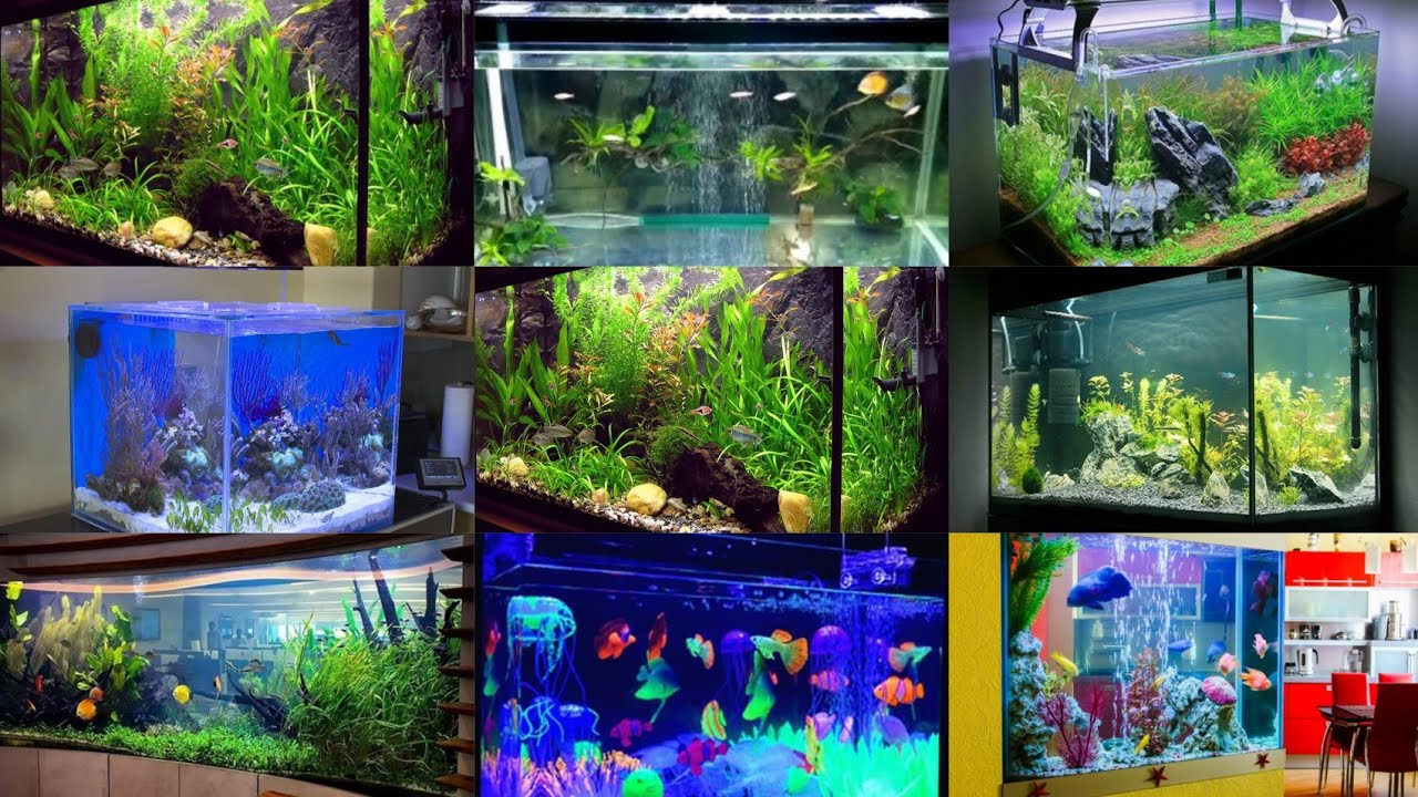 Contoh Desain Aquarium Ikan Hias Ukuran Besar Aquascape Akuarium Ada Ikan Youtube