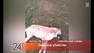 Издевательство над животными