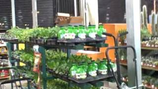Rain Water Barrels, Raised Bed Kits And Tomato Plants In Winter At Home Depot