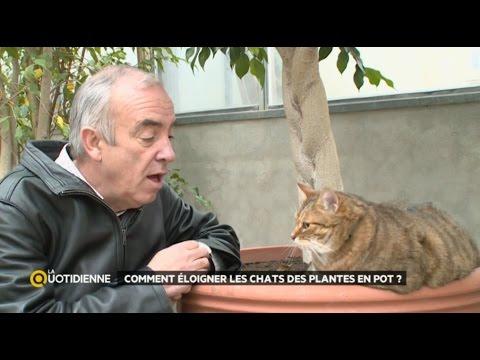 Trappage de doovi - Eloigner les chats du jardin ...