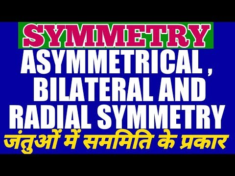 WHAT IS SYMMETRY AND ITS TYPES IN ANIMALS ? ANIMAL SYMMETRY - ASYMMETRY, RADIAL AND BILATERAL  