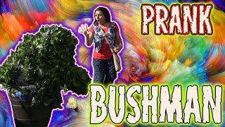EPIC Bushman Prank - Combined Episodes - Funny Video - Funny scare Prank- Funny Pratical Prank