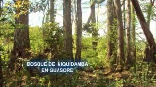 SANTA ELENA LA PAZ HONDURAS.wmv