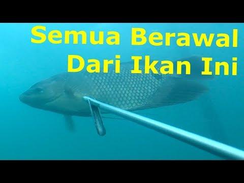 Nembak Ikan Di Danau Toba