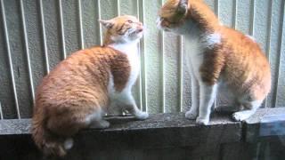 塀の上で、2匹の猫が向かい合ってウナリをあげていました。片方がどうも...