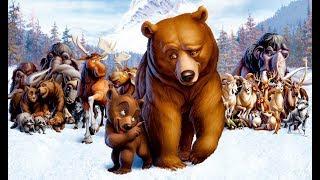 Pelicula hermano oso