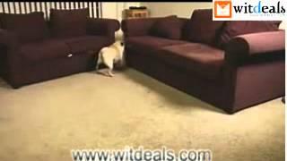 犬はレーザーポインターポイントの点に追う,本当に面白いです http://ww...
