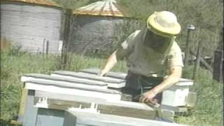 Honey Bees and Beekeeping 3.1: Things are buzzin